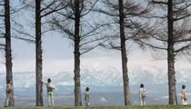 Arashi Trees