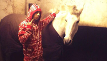 Dappy & His Horse